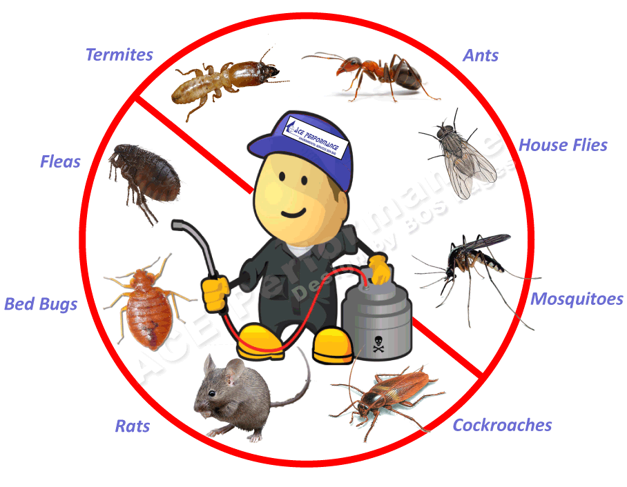 how do pest control get rid of mice